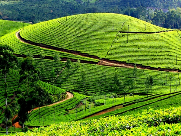 Munnar to Visit in Monsoon