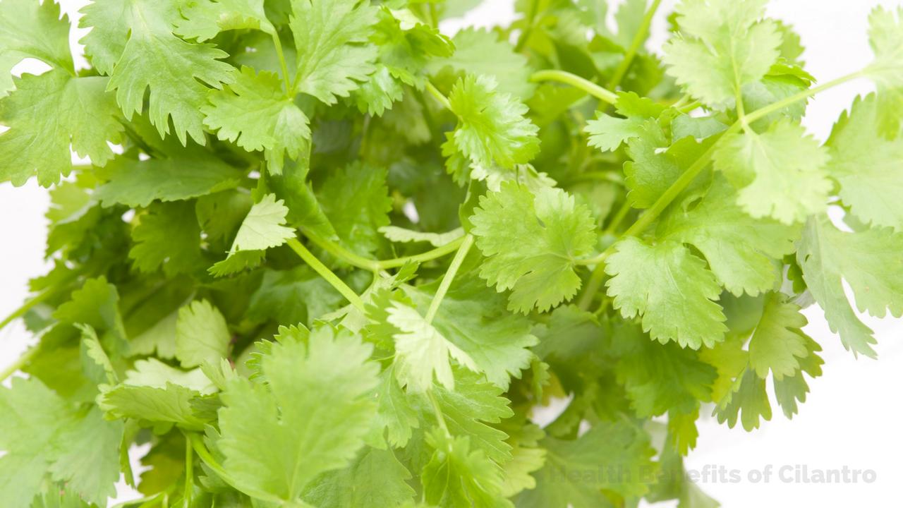 Health Benefits of Coriander Leaves